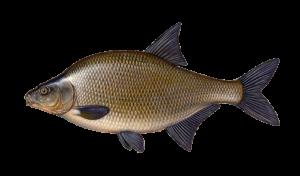 Vidy-ryby-lesh