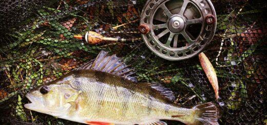 lovlja-okunja-na reke-letom